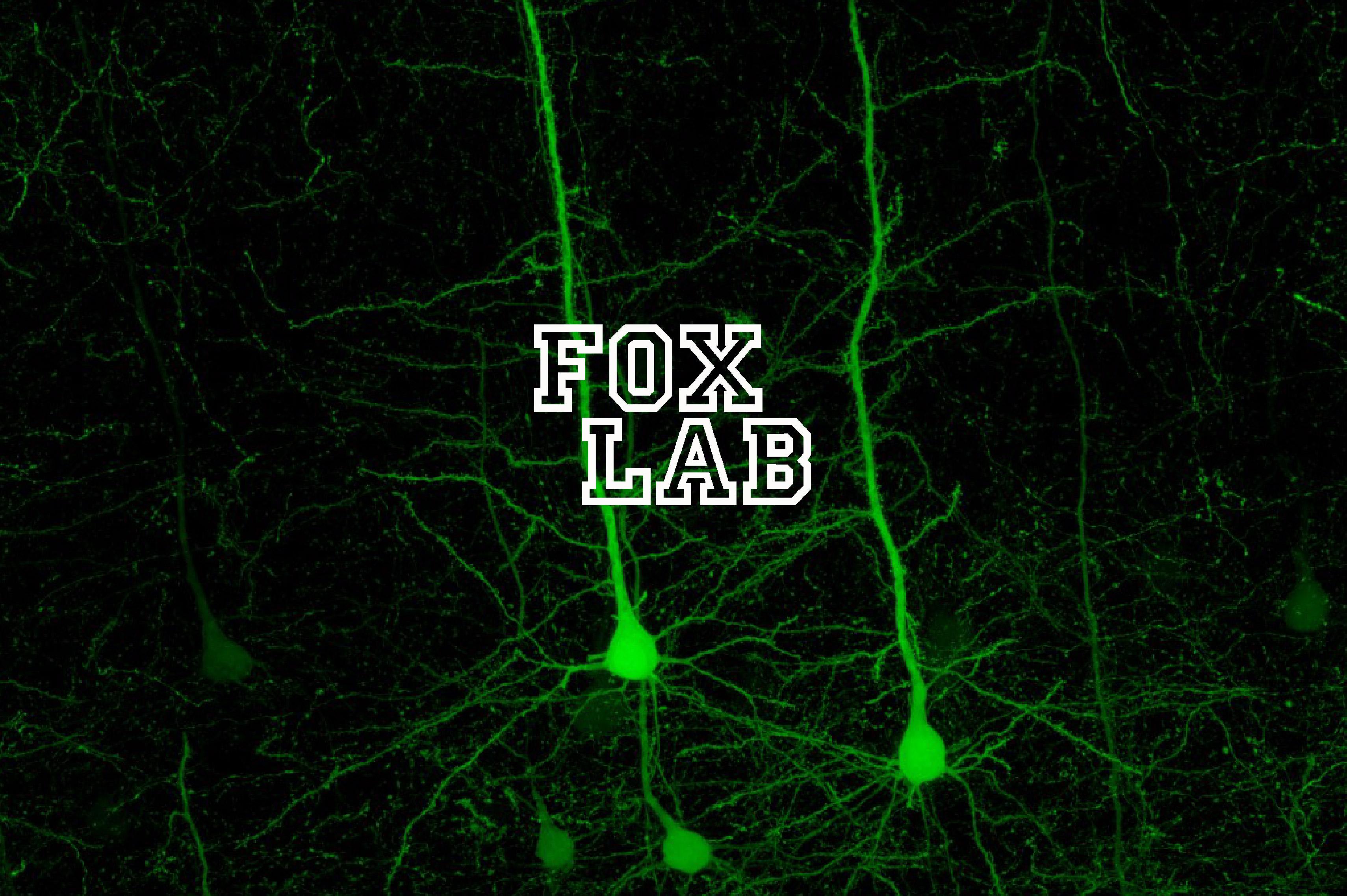 Fox Lab
